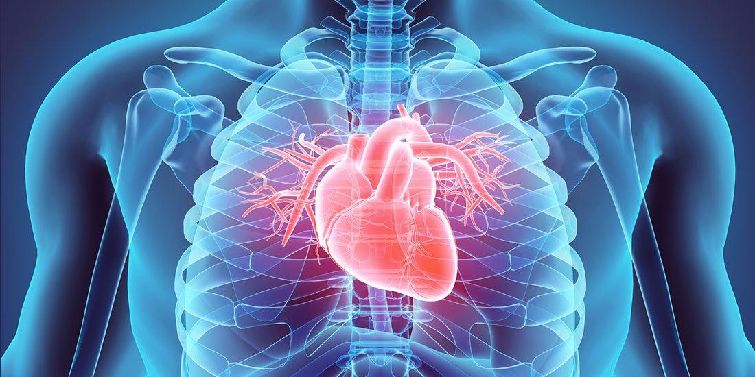 Диетичният прием на менахинон е свързан с намаляване на риска от коронарна сърдечна болест: Изледване в Ротердам